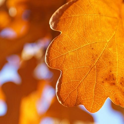 Фото: осень